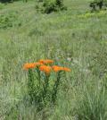 wisconsin prairies