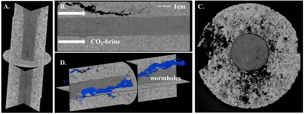 Researchers examined chemical reactions taking place underground during carbon sequestration to identify potential leakage pathways. (A) is a cross-section of a limestone/cement sample before the experiment. (B) shows dissolving in the limestone but not the cement (at the center of the image). (C) is a sandstone/cement sample, indicating that the sandstone remained intact when contacting carbon-dioxide-infused saltwater, and the cement at the core of the sample began to dissolve. (D) shows the pathways created in the limestone from the experiment. (Credit: Zuleima Karpyn / Penn State University)