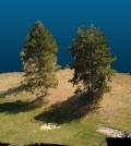 Tree models were made using imaging data collected by aerial drones and the LES forest simulator. (Credit: Washington State University)