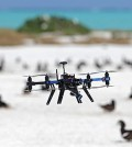 Researchers in Australia are using drones to monitor seabird populations. (Credit: Rohan Clarke)