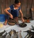 Fish market at Stung Treng, Cambodia. (Credit: William Darwell)