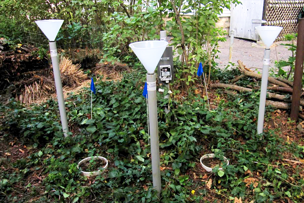 An urban research site outfitted for carbon and nitrogen measurements. Visible in the picture are three columns to measure nitrogen deposition, two soil respiration collars, and an Onset HOBO datalogger attached to a soil moisture probe. The blue flags denote where incubating soil samples in breathable polyethylene bags are buried for analysis of net nitrogen mineralization. (Credit: Steve Decina)