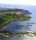 Salt marshes are more tolerant to sea level rise than previously thought. (Credit: M. Kirwan / VIMS)