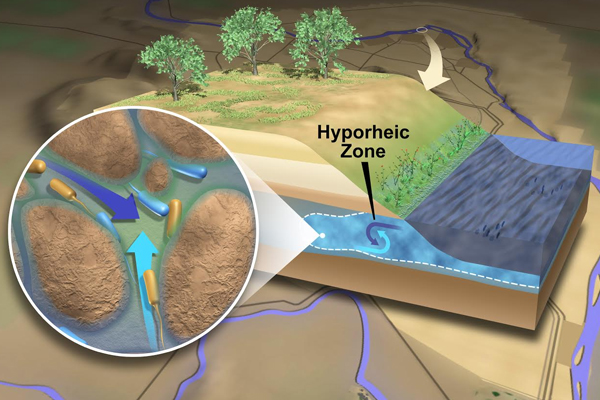 Scientists call the area along a river where river water and groundwater mix the hyporheic zone. The circular inset illustrates some of the features of this zone, including tiny grains of sediment, water from both sources mixing, and the microbes that actively ply these waters and sediments. (Courtesy: Pacific Northwest National Laboratory)