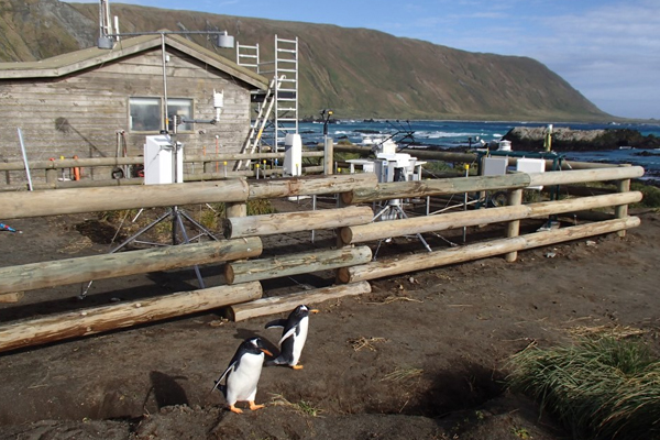 Australia has operated a research station on Macquarie Island, located about halfway between New Zealand and Antarctica, since the early 1900s. The local population consists mainly of research staff and penguins. (Credit: Jeff Aquilina / University of Washington)