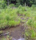 A restored stream site in the Daniel Boone National Forest. (Credit: Jesse Robinson / University of Louisville)
