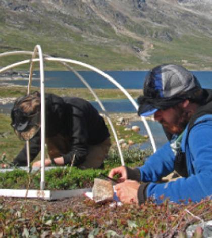 Researchers measuring on the tiny tundra plants. (Credit: Magnus Krashøj)