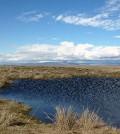 Wetland in Douglas County, Washington. (Credit: Meghan Halabisky / University of Washington)