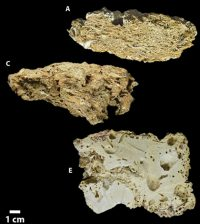 Surficial reef fragments from the Northern (A), Central (C), and Southern Sectors (E). (Credit: Rodrigo L. Moura, et al)
