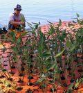 Floating wetland. (Credit: Jim Melvin / Clemson University)