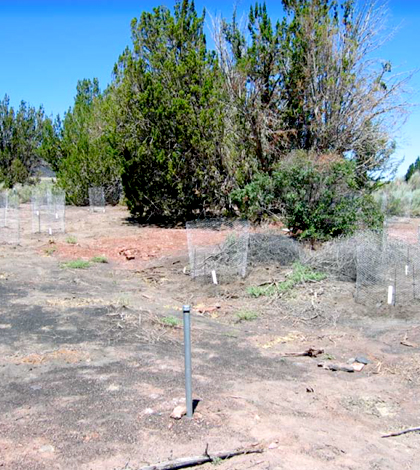 Heiser springbox area, after demolition and revegetation work, August 2010. (Credit: National Park Service)