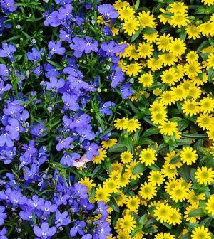 Plant diversity. (Credit: Public Domain)