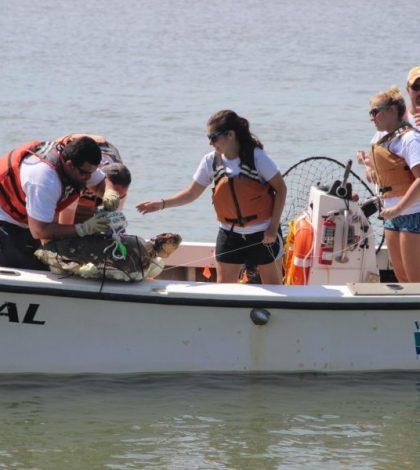 loggerhead sea turtle mortality