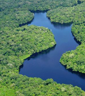 Amazon rainforest. (Credit: Neil Palmer / Center for International Forestry Research via Creative Commons 2.0)