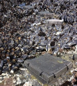 California mussels acidification