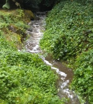 Clackamas County Streams insecticides pesticides