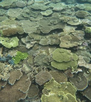 coral mass spawning