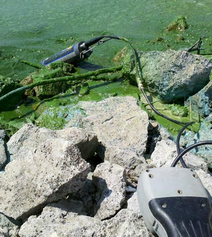 National Lakes Assessment algae cyanotoxins microcystin