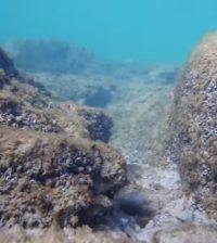 reef at Morgan Shoal