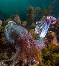 squids and cephalopods