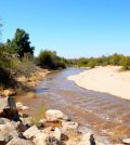 text: colorado river wetland restoration