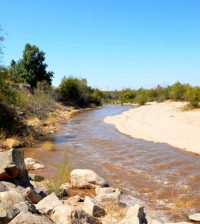 text: colorado river wetland restoration