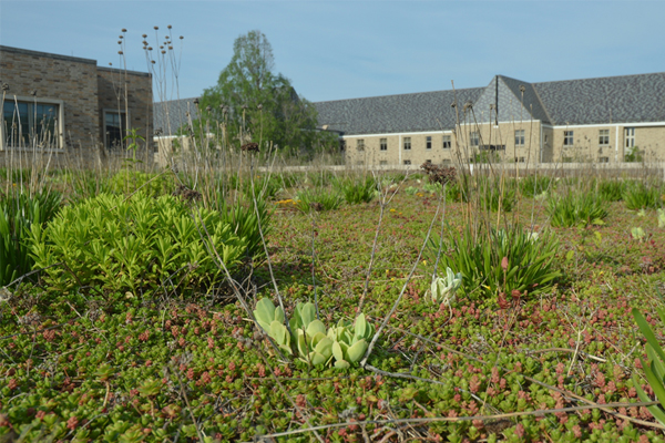 Cool roofs green roofs