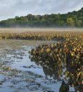 Hudson River wetlands