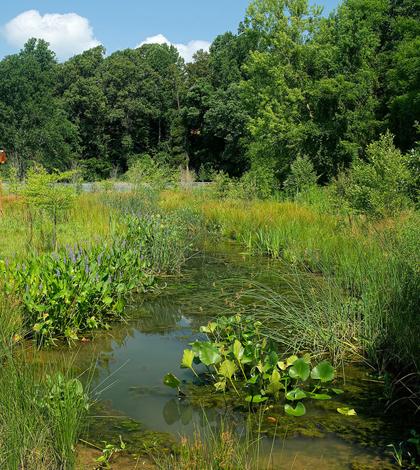 estoration projects wetlands