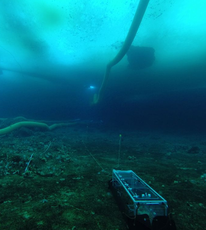 Antarctic Free Ocean Carbon Enrichment antFOCE