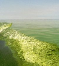 lake erie 40 percent reduction phosphorus