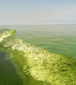 lake erie 40 percent reduction phosphorus