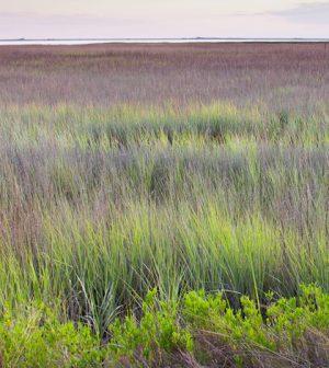 Georgia coastal wetlands