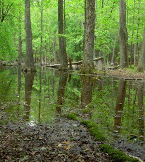 insular ecosystems southeast karst wetlands