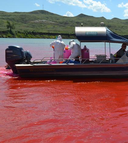 pallid sturgeon missouri river