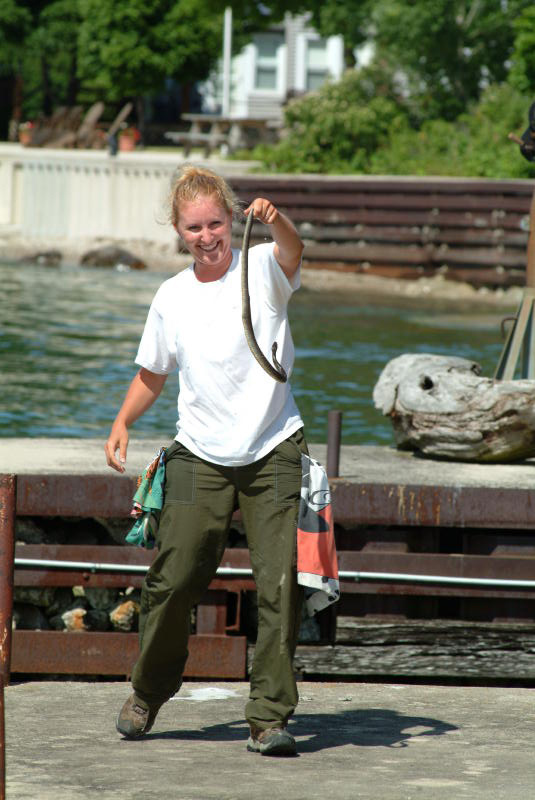 lake erie watersnake endangered