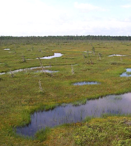 coastal wetlands