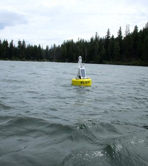 suttle lake buoy salmon