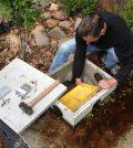 water level sensors rain gardens