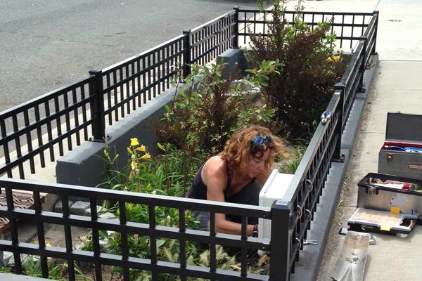 rain gardens villanova philadelphia