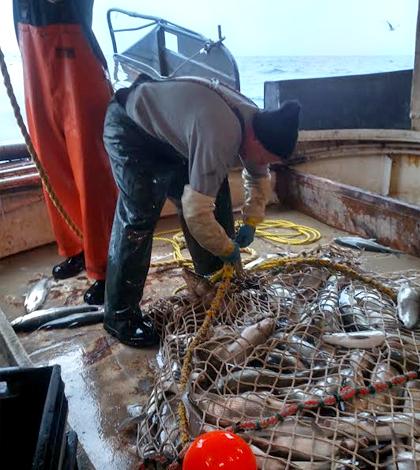 lake whitefish lake michigan trawling