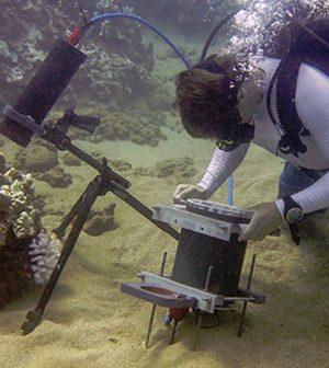 benthic underwater microscope