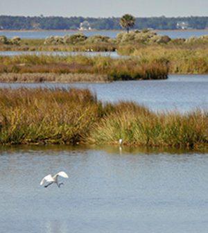 coastal wetlands monetary damage