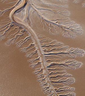 colorado river delta pulse flow