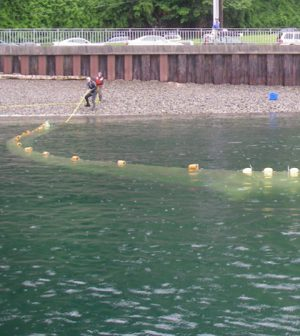 elliott bay salmon reconstruction