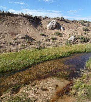 streamside vegetation golden trout
