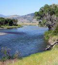 fish kill Yellowstone River