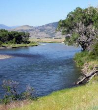fish kill Yellowstone River