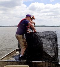 Researchers pull a tandem fyke net as part of an Asian carp habitat-use study. (Credit: Western Illinois University)