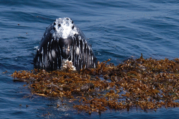 marine protected areas channel islands